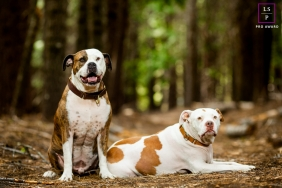 California on-location, outdoor Lifestyle Pet Portrait of a dog duo in the woods
