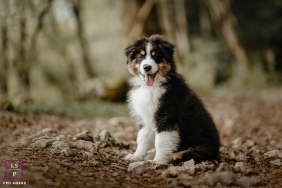 Savoie on-location, outdoor Lifestyle Pet Portrait of a Shetland puppy in the woodlands