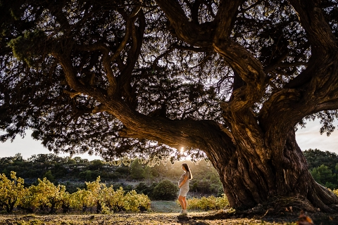 Perpignan Pyrenees-Orientales lifestyle outdoor pregnancy shoot Under the oldest juniper of Europe