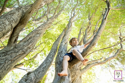 Lake Tahoe photographer captured this lifestyle image of a young boy sitting in a tree.
