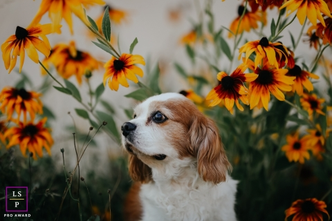 This is a lifestyle photo from Savoie of a dog with flowers - cavalier king charles