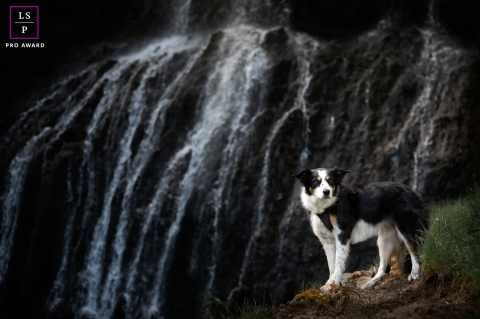 This is a lifestyle dog session in Limoges, France showing the cascade waterfalls
